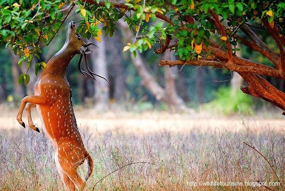 Национальный парк Индии