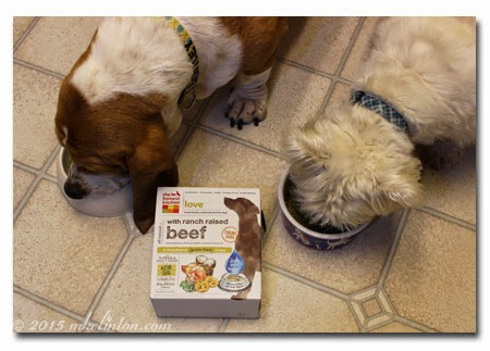 Basset Hound and West Highland Terrier eating dog food