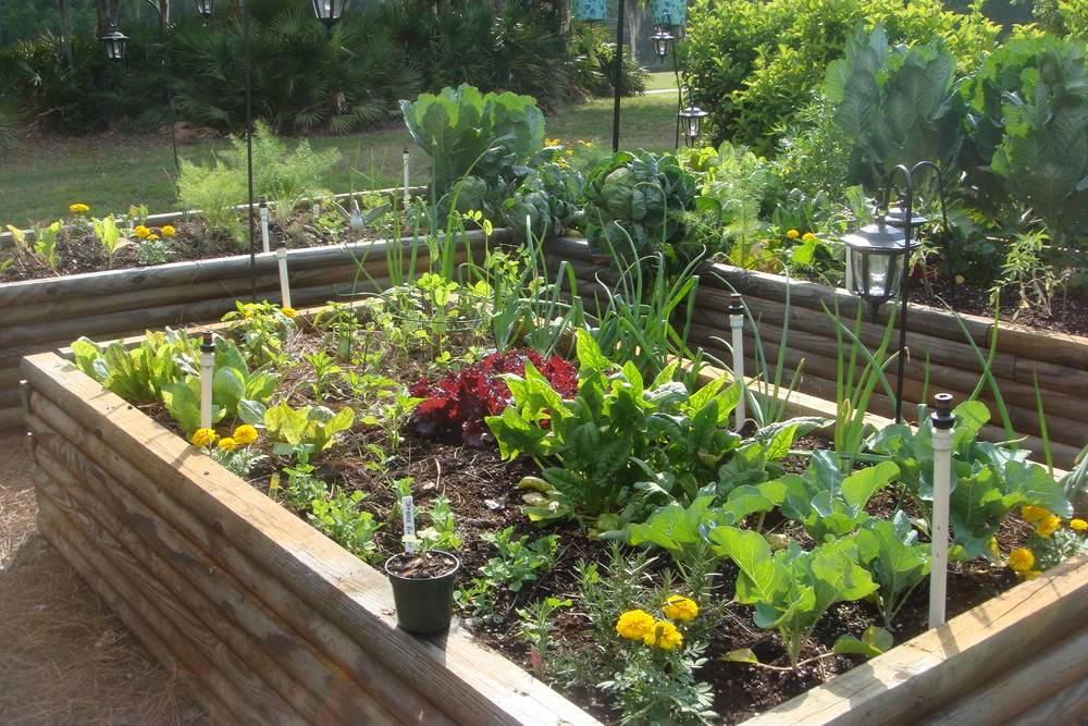 Como crear un huerto en casa en solo 5 pasos ecosiglos - Pequeno huerto en casa ...
