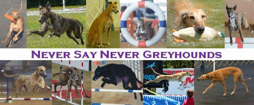 NEVER SAY NEVER GREYHOUNDS