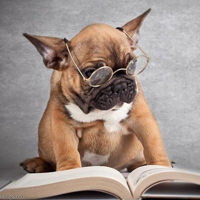 Kiến thức về thú cưng