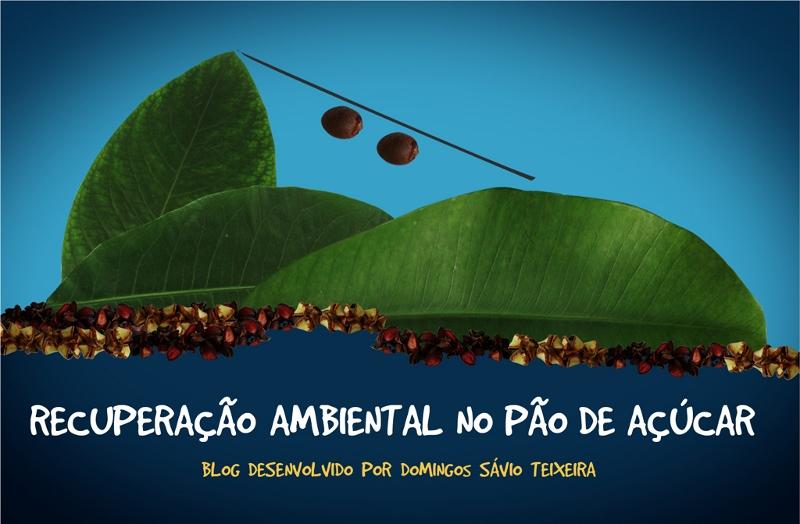 RECUPERAÇÃO AMBIENTAL NO PÃO DE AÇÚCAR