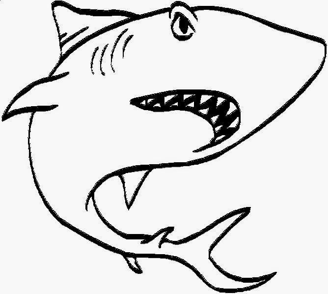 Shark Facts  Kidzone