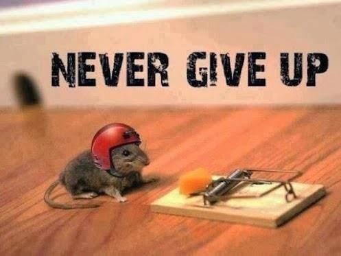 Das Lebensmotto, mit dem meine Ratten mir Vorbild zu sein versuchen, gibt es visualisiert: