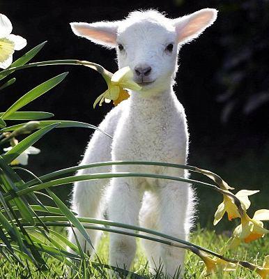 pasqua, lav, campagna contro il consumo di carne, proteste contro la macellazione degli agnellini, pranzo pasquale, the fashionamy, amanda marzolinii, italian fashion blogger