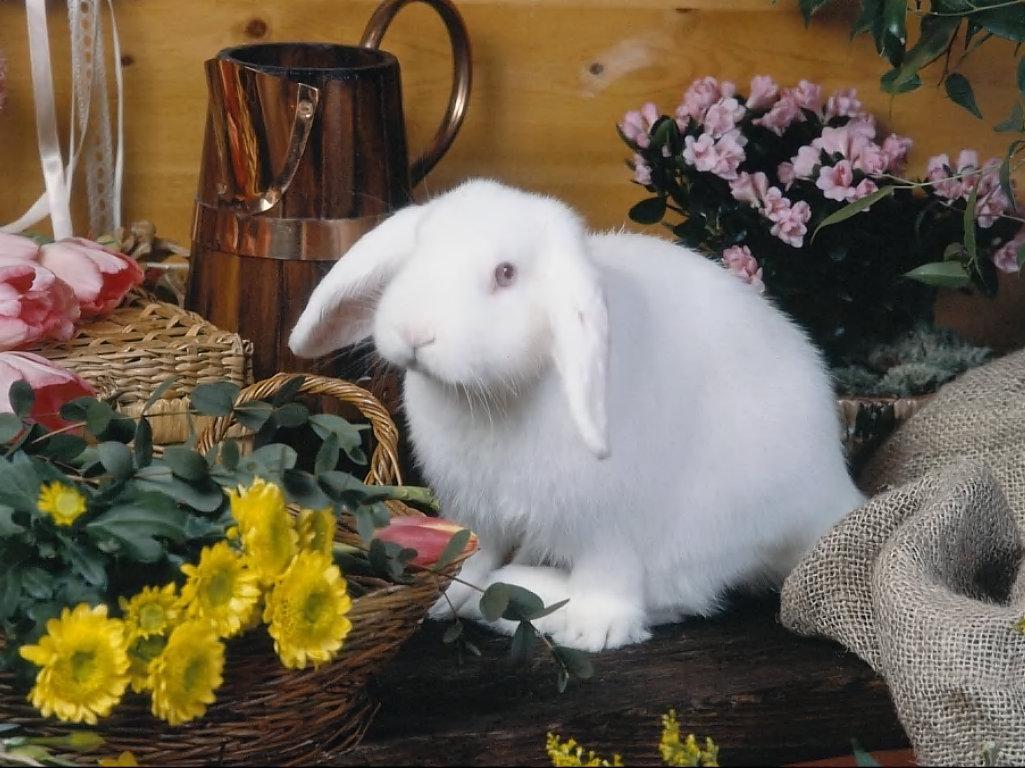 http://4.bp.blogspot.com/-5KPc27vZPKI/UNxTIRUVGSI/AAAAAAAAMYM/2YpubYxzN94/s1600/Bunny+in+Flower+Shop+Wallpaper.jpg
