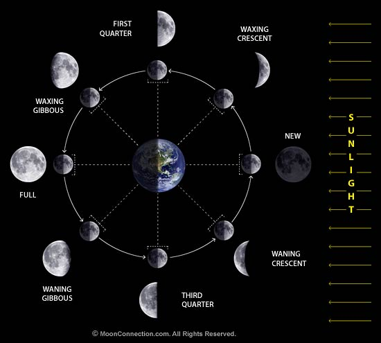 Different types of Moon Phases