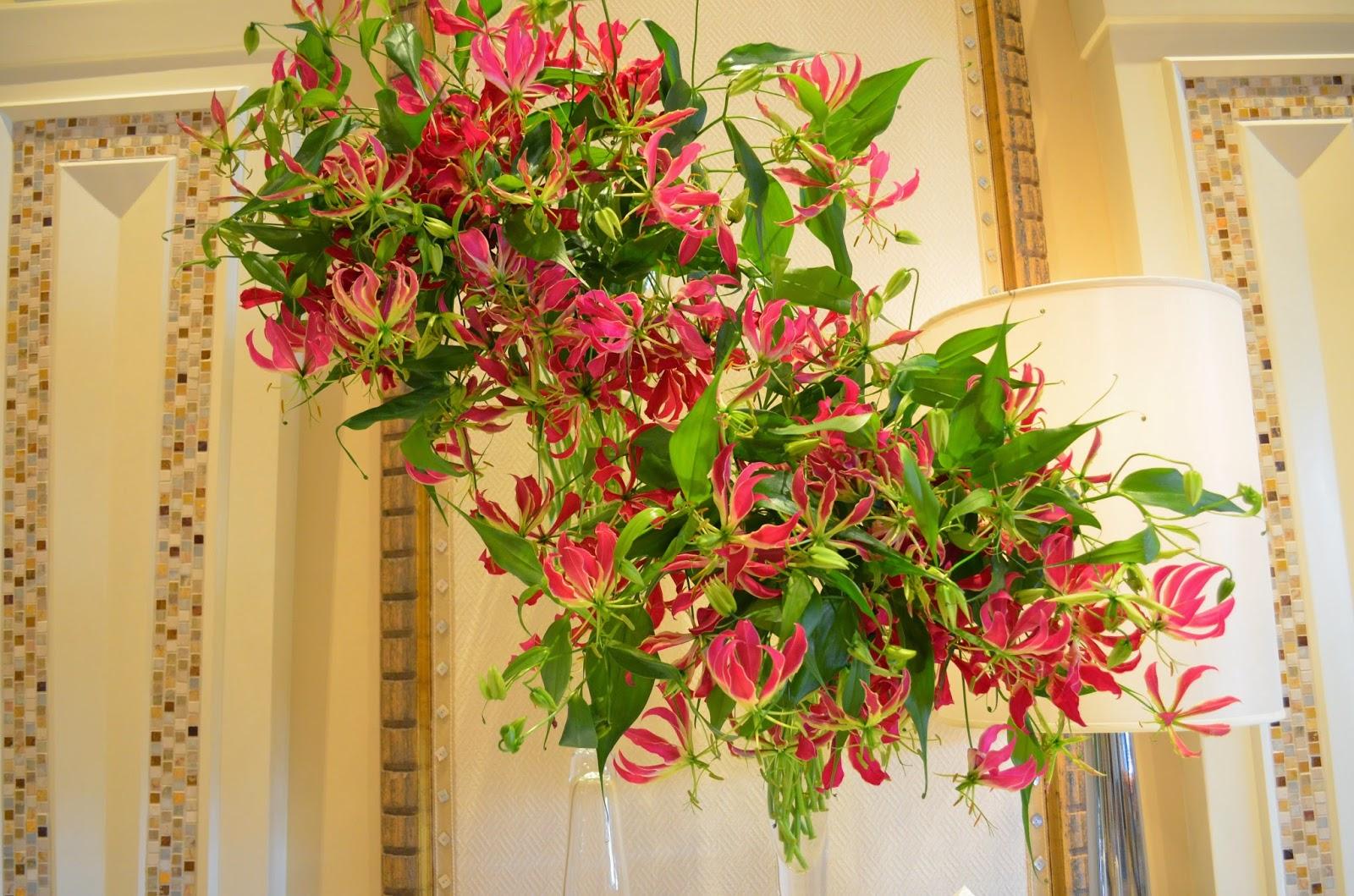 Домашние плетущиеся цветы фото и названия