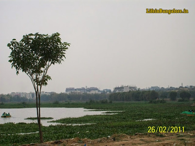 Madivala BTm Lake covered with weeds