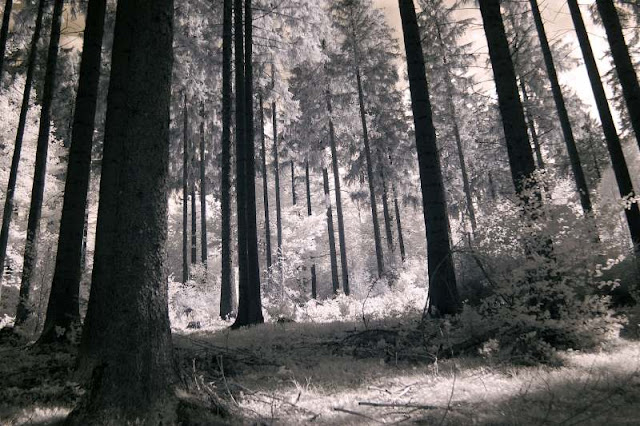 Forest in infrared light