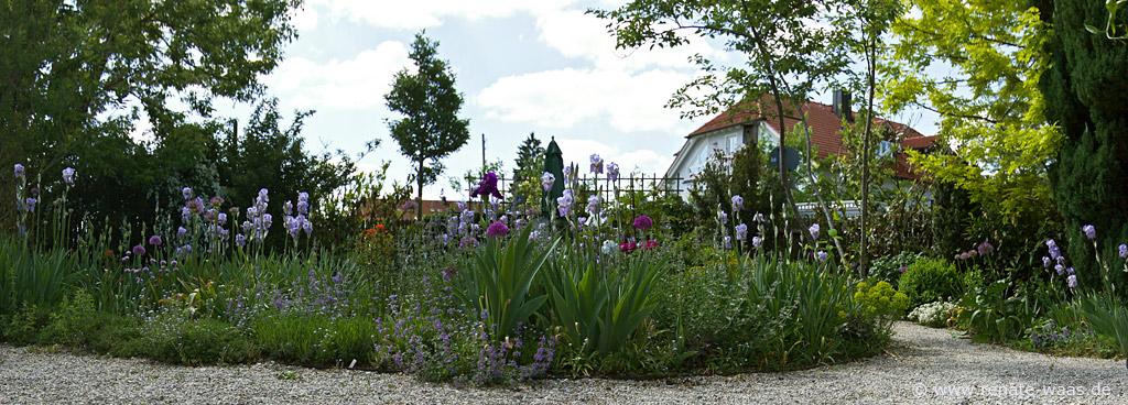 Gartenblog geniesser garten iris bl te im staudenbeet - Geniesser garten ...