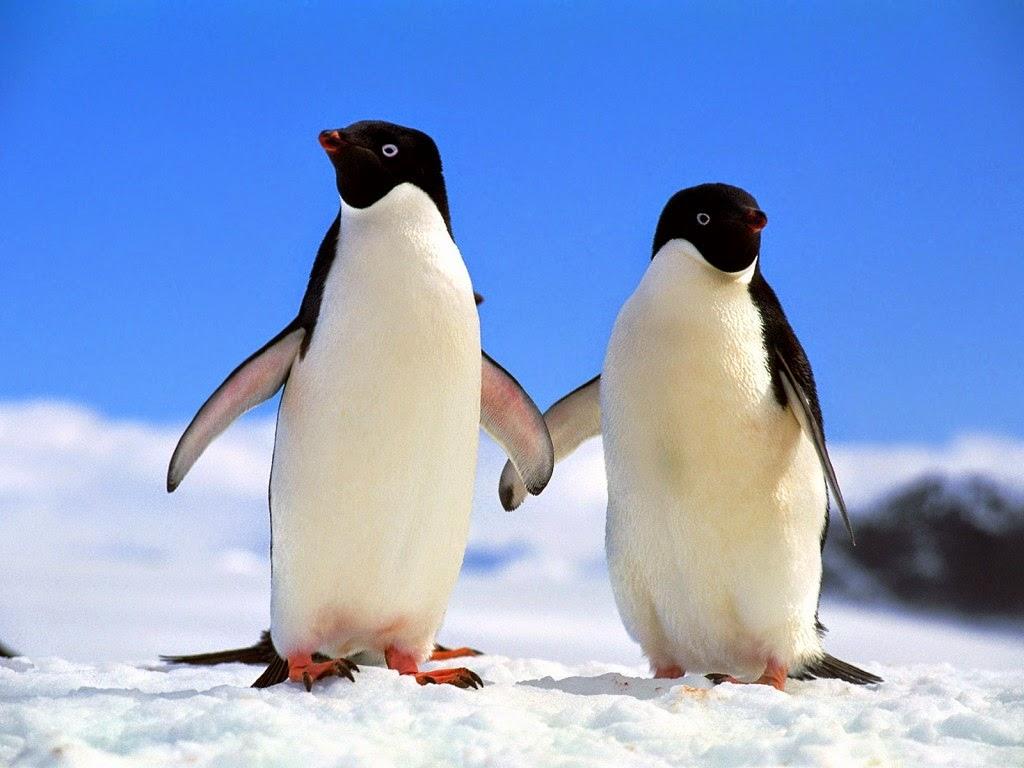 informabicho pinguim