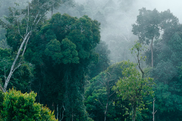 Kalimantan Rainforest