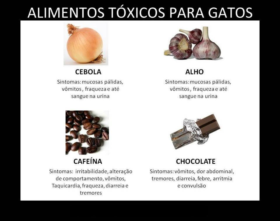 Alimentos t xicos para gatos toxic foods for cats - Alimento para gatos esterilizados ...