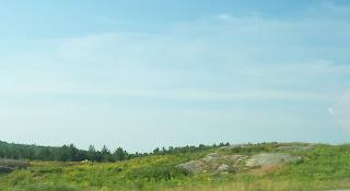 maine landscape, maine blueberry field photograph, blueberry barren, maine photograph