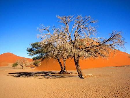 Gambar pemandangan gurun