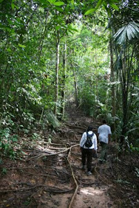 JUNGLE TRACKING TO CANOPY WALKWAY