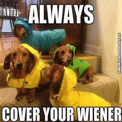 Always Cover Your Wiener Funny Dogs Wearing Rain Coats