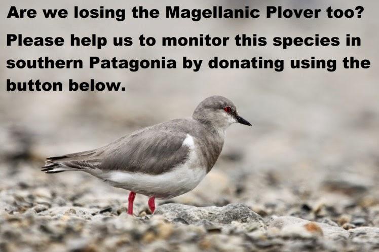 Magellanic Plover Appeal