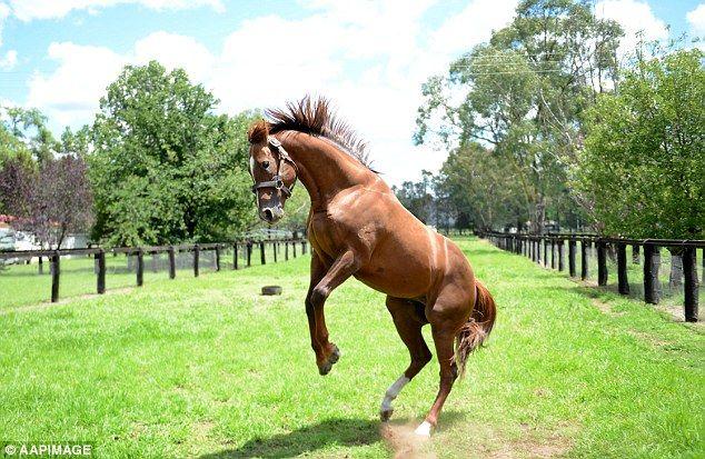 Horses Rising