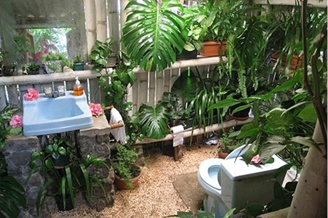 sdb jungle