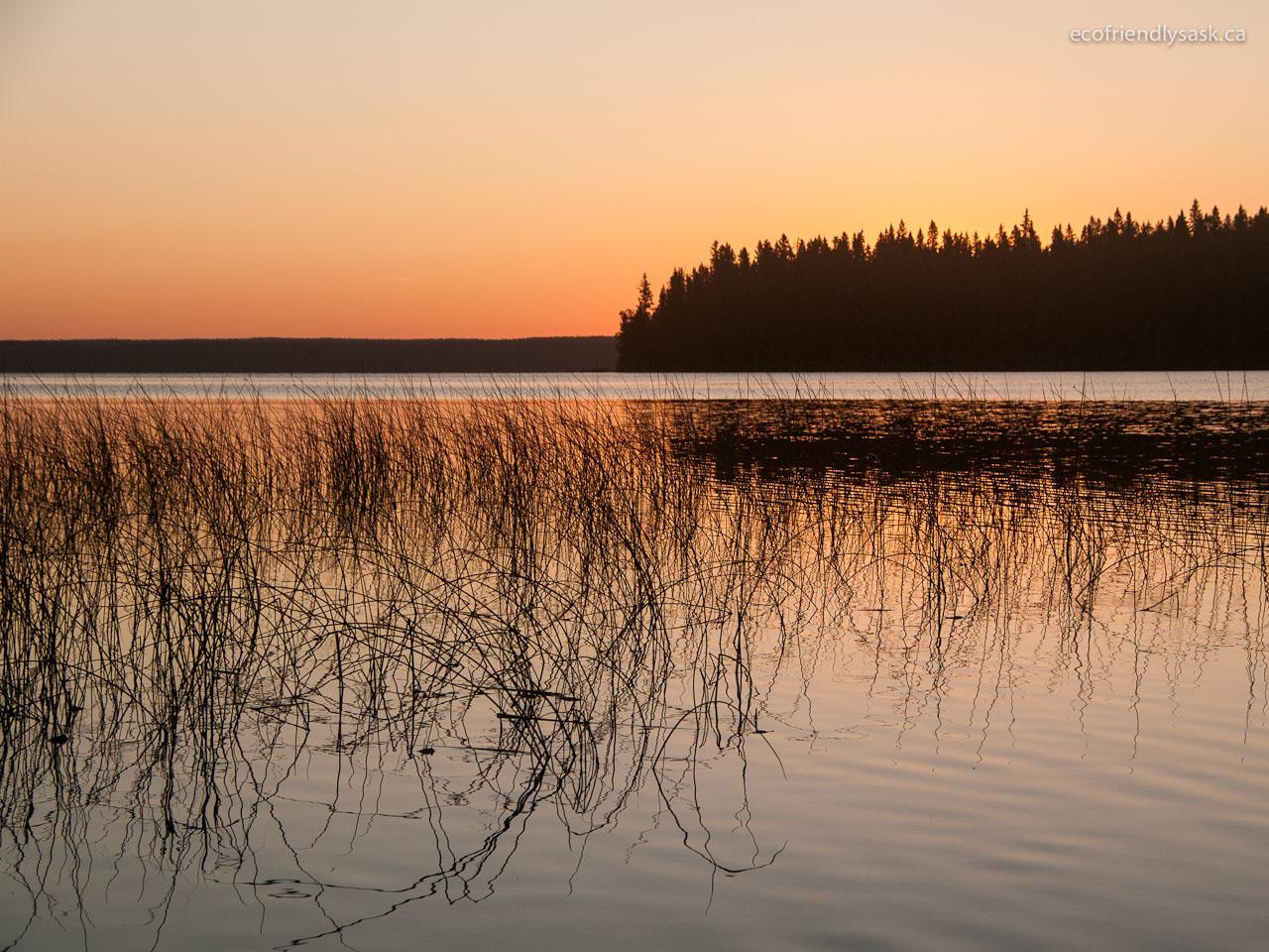 EcoFriendly Sask: A Change of Scene