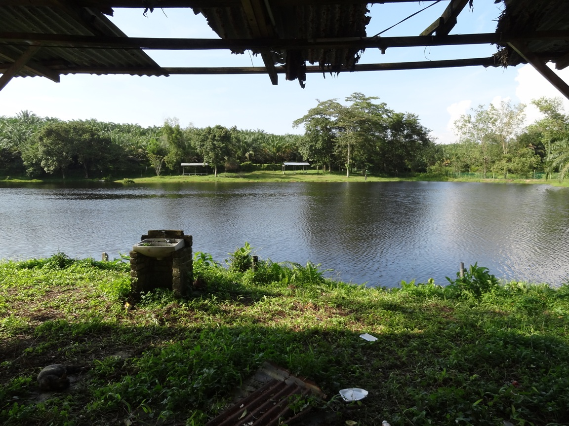 Fishing spots in kuala lumpur selangor tanjung event for Freshwater pond fish