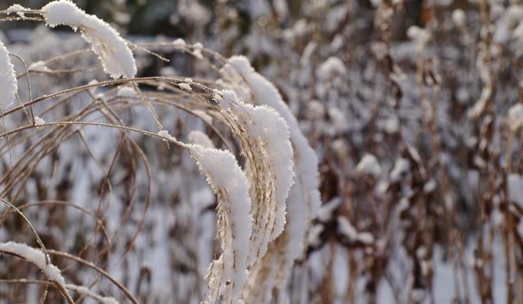 Skab oplevelser i haven om vinteren ved hjælp af græsser og solide stauder