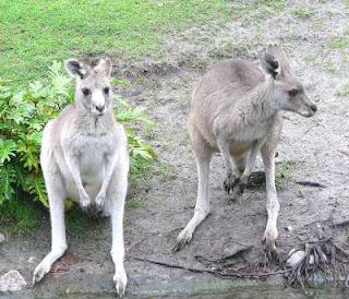 صور الحيوان الذي لا يشرب الماء 9998304857.jpg