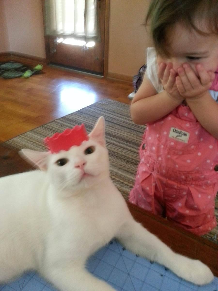 Сумасшедшие коты, фото 12