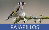 Imágenes de pajarillos, pájaros y aves exóticas del paraíso en diversos colores - Birds