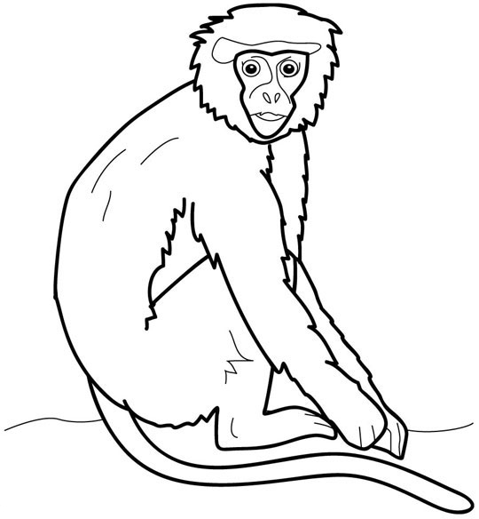 Orangutans Coloring Pages Ideas Orangutan Coloring Pages