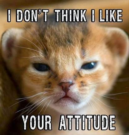 "Adorable kitty meme ""I don't think I like your attitude"""
