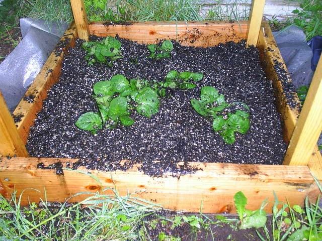 how to build a potato bin