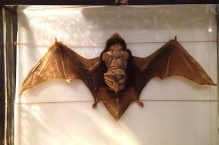 Bat Exhibit - Sketchbook - Grant Museum of Zoology Field Trip London - Arts Award Bronze Level Art Portfolio Ideas