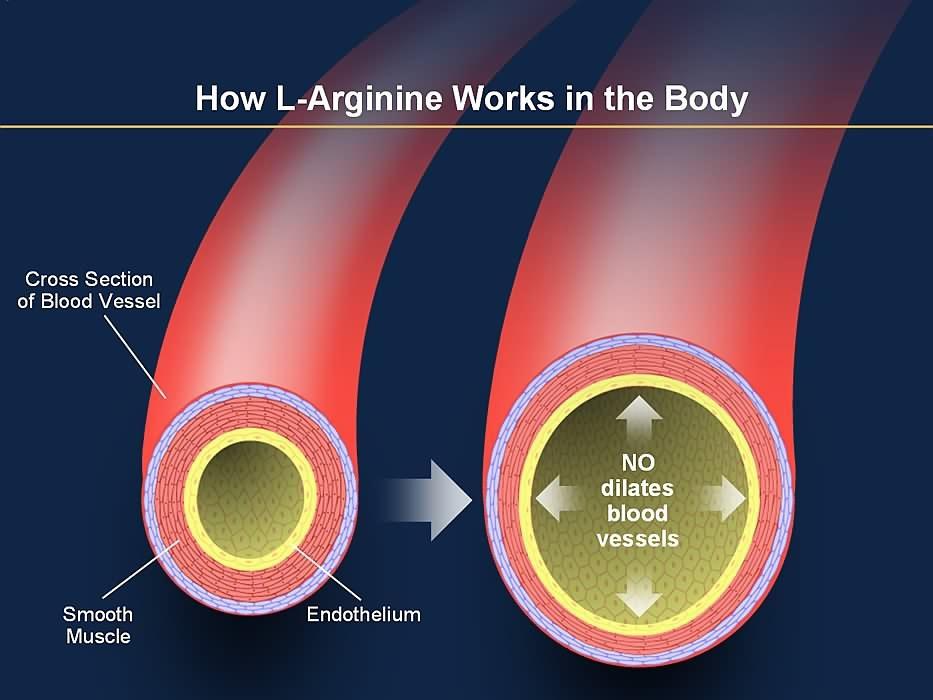 L arginine muscle building