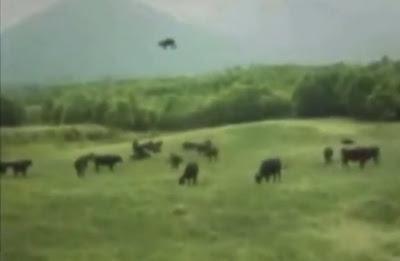 vaca levantada y llevada por un ovni en argentina 1983