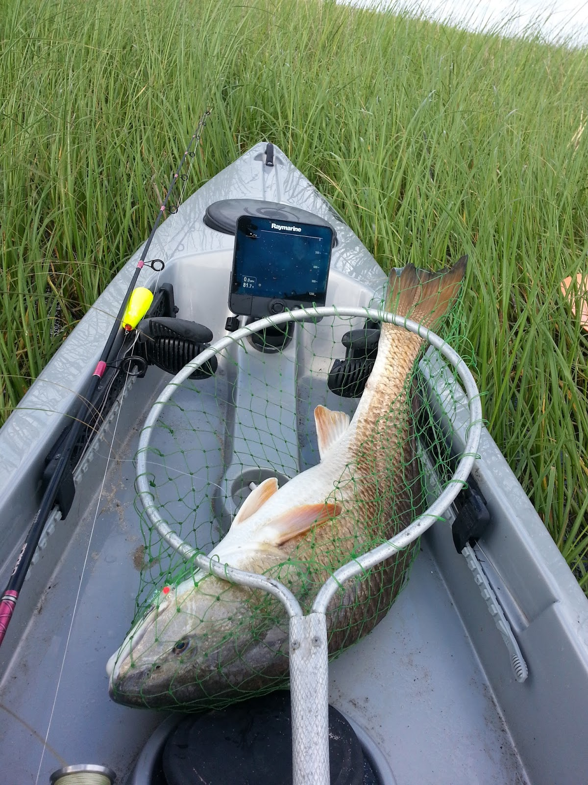 Bayou kayak fishing save our lake fishing rodeo for Lake pontchartrain fish species