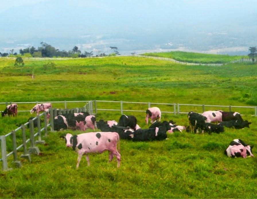 peluang bisnis peternakan