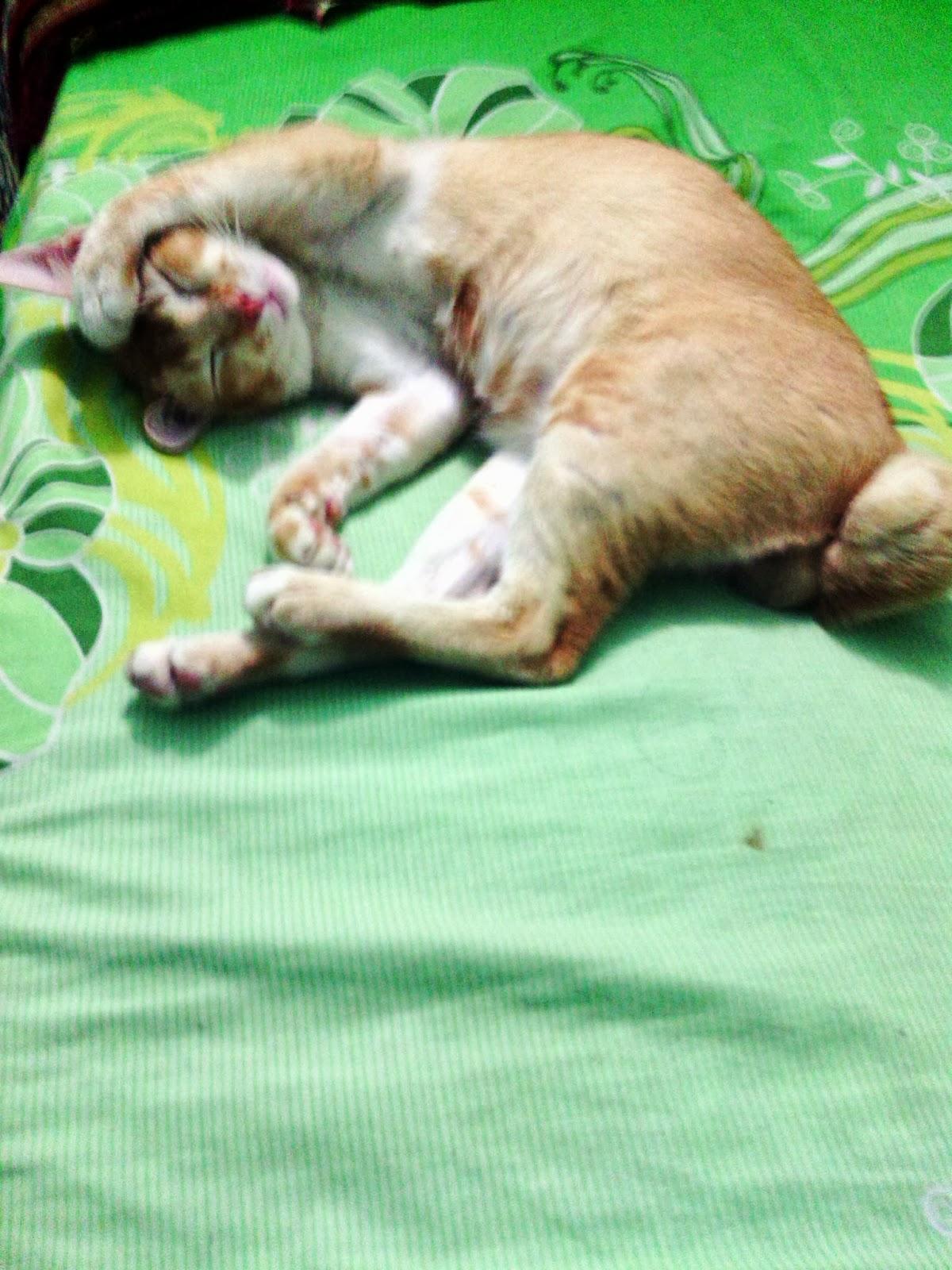 Mio kucing
