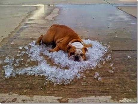 Ventilador com agua gelada