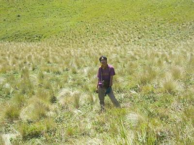jalur selo banyak lembahnya