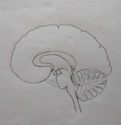 how to draw human brain step by step