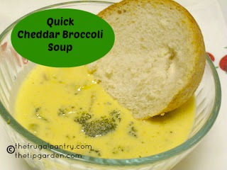TIP GARDEN: Fast & Easy Cheddar Broccoli Soup
