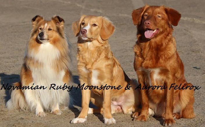 Novamian Ruby Moonstone & Aurora Felirox