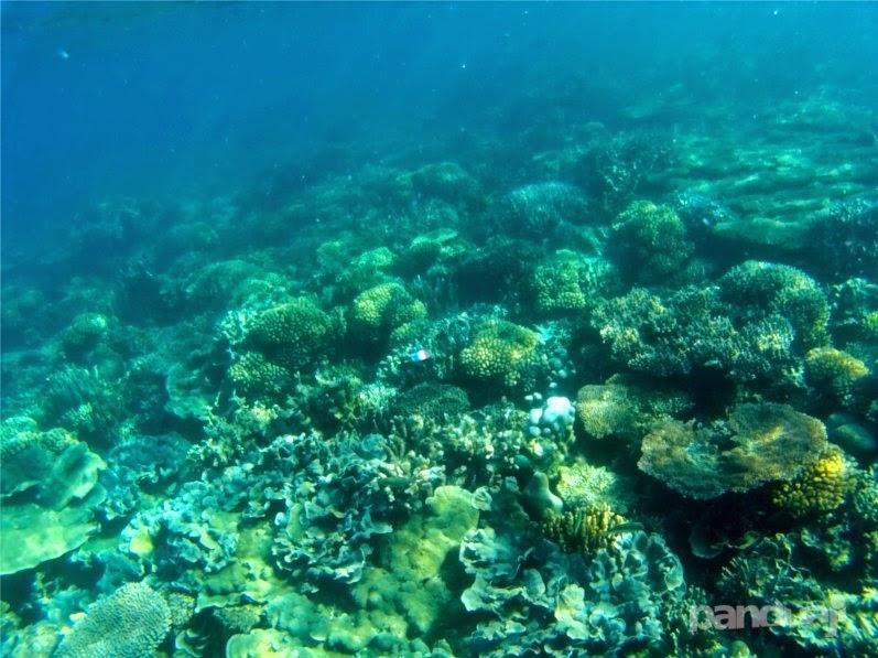 kondisi bawah laut bawean