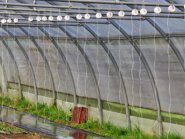 L 39 envol du lucane mara chage biologique dans l 39 oise - Tuteur tomate avec ficelle ...