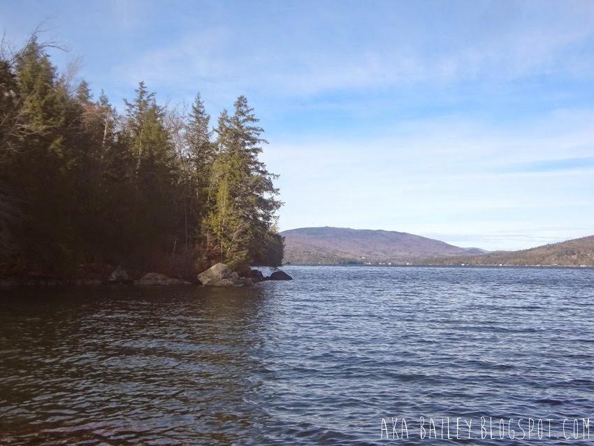Trees around Newfound Lake, New Hampshire
