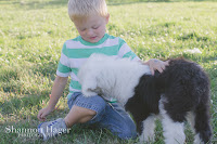 Shannon Hager Photography, Old English Sheepdog Puppy