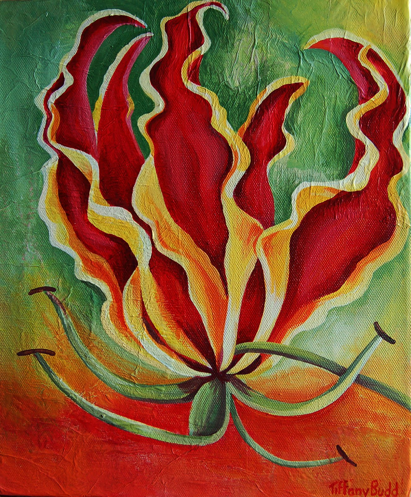 African Flame Lily